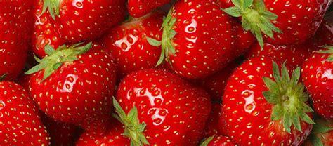 Spargel Herkunft Verarbeitung Und Lagerung by Erdbeeren Einkauf Und Kennzeichnung Aid