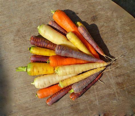 cuisiner des carottes où trouver des carottes de couleurs variées jardissimo