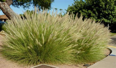 entretien jardin en novembre conseils utiles de jardinage