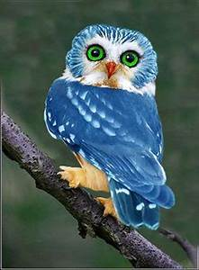 Beautiful And Rare To See Blue Owl