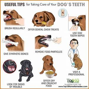 useful tips for taking care of your dogs teeth top 10 With caring for your dog