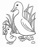 Coloring Pages Duckling Duck Baby Ducks Cute Little Cartoon Getcoloringpages Five Ugly sketch template