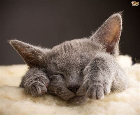 cats dogs better pets than why reasons sleep animal ten facts animals know brain debate pet which pets4homes blowing mind