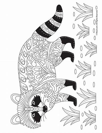 Coloring Pages Adult Raccoon Racoon Fall Animal