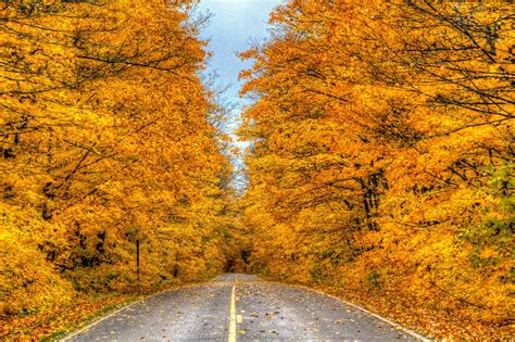 Finding Fall Foliage In The Sault Ste Marie