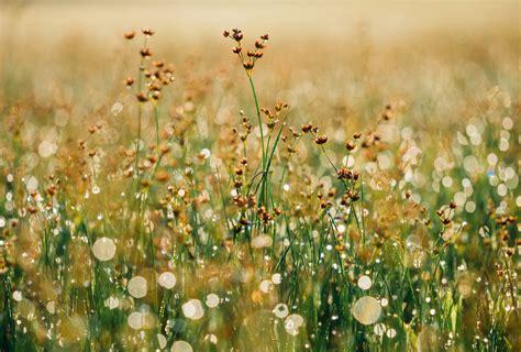 picallscom wildflowers  aaron burden