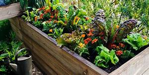 Como hacer un huerto en casa parques alegres iap for 5 cultivos faciles para empezar un huerto en casa