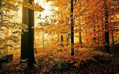 Forest Wood Woods Autumn Fall Related Nature