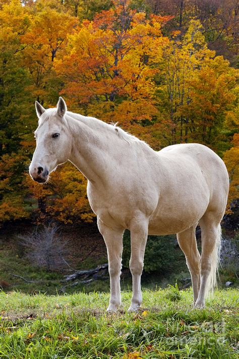 horse autumn jannsen brian photograph 27th uploaded july which