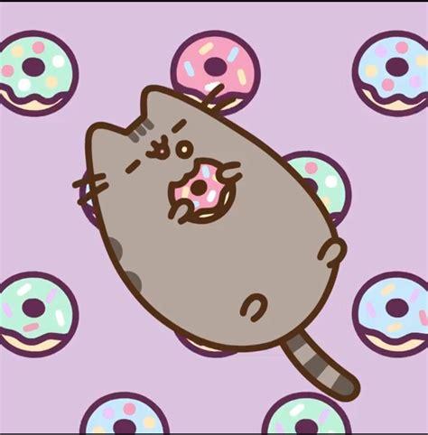 pusheen   donuts pusheen  cat