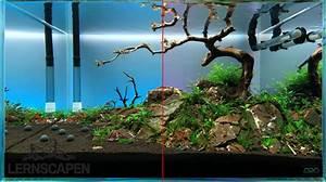Aquarium Gestaltung Bilder : 5 einfache aquarium einrichten tipps lernscapen ~ Lizthompson.info Haus und Dekorationen