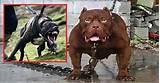 verdens farligste dyr top 10