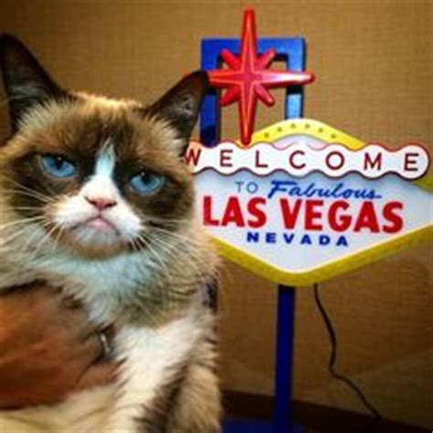 1000+ Images About Grumpy Cat On Pinterest  Grumpy Cat
