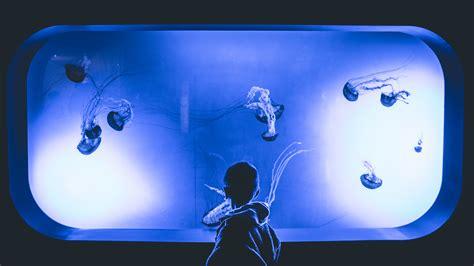 images abstract animal aquarium background