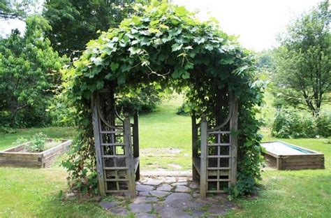grape vine trellis 30 fascinating grape arbor ideas the patio decor