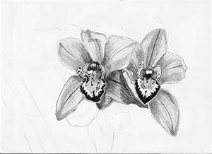 Orchid sketch by pktommy on DeviantArt