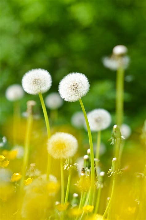 planting flowers in 11 best wild edible plants found in the usa