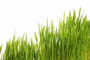 Bambus Pflegen Zimmer : bambusgras so pflegen sie die zimmerpflanze ~ Lizthompson.info Haus und Dekorationen