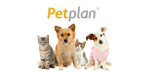 petplan pet insurance review top