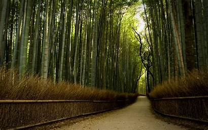 Forest Wallpapers Bamboo Nature