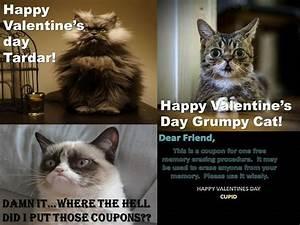 Grumpy Cat, 'Lil Bub and Col. Meow | Grumpy cat | Pinterest
