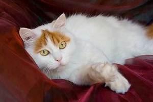Katze Kotzt Viel : katzen die viel miauen ~ Frokenaadalensverden.com Haus und Dekorationen