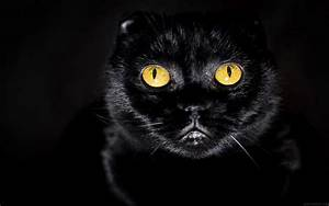 Images Of Black Cat Eyes Wallpaper Summer