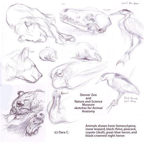 images  animal anaotomy  pinterest animal