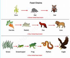 What is the use of human parasites in the food chain of ...
