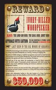 Reward Posted for Evidence of Ivory-Billed Woodpecker ...