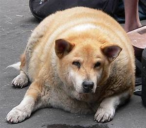 Fat Dog Or Fat Cat  6 Supplements To Speed Weight Loss