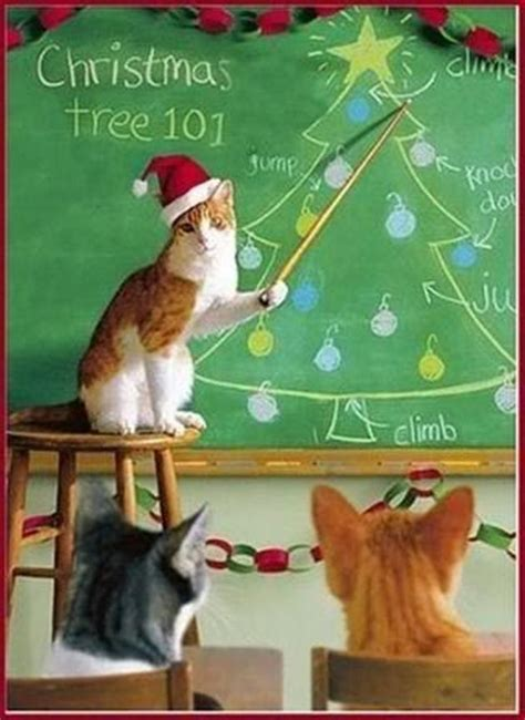 funny pictures of cats and christmas trees compilation 19 pics