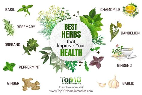 10 Best Herbs That Improve Your Health  Top 10 Home Remedies