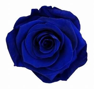 Dark Blue - EcuaMia Flowers