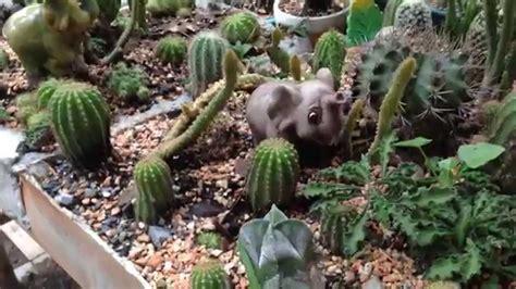 Cactus Thailand #16 - YouTube