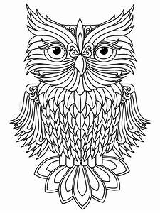 Amusing big owl black outline isolated on the white ...