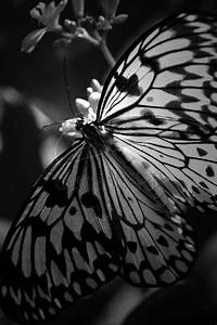 Butterfly in Black and White. by heartofhealing on DeviantArt