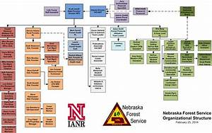Hybrid Hazelnut Consortium Nebraska Forest Service