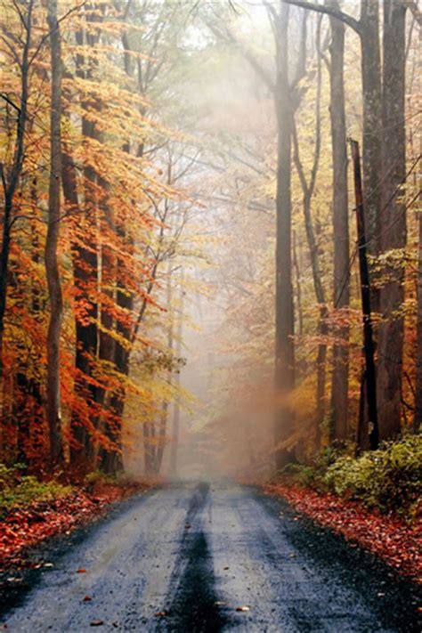 Fall Road Iphone Wallpaper by Autumn Road Iphone Wallpaper Idesign Iphone
