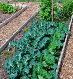 Home Garden Vegetable Patch Gallery