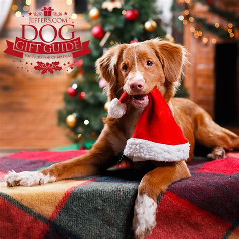 paw sitively awesome christmas gift guide