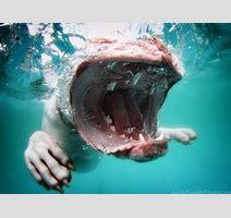 Underwater Dogs Hunde Unter Wasser Hundeb Cher Planet Hund