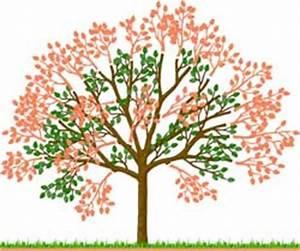 Hohlkehlleisten Auf Gehrung Schneiden Anleitung : die besten 25 kirschbaum schneiden ideen auf pinterest ~ Lizthompson.info Haus und Dekorationen