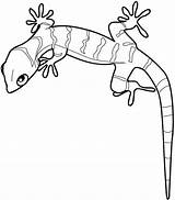 Gecko Coloring Pages Cute sketch template