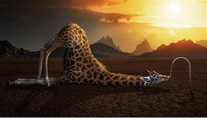 Giraffe Wallpapers Funny Pixelstalk Photoshop Nature