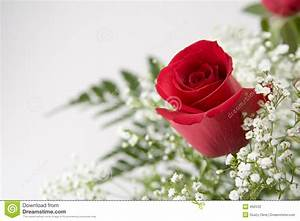 Single Red Rose Stock Photography - Image: 492532