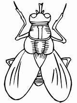 Coloring Pages Primarygames Insect Insects Bug Science Bugs Printable Fly Cut Activity sketch template