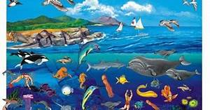 Ocean ecosystem for kids | Childhood Education
