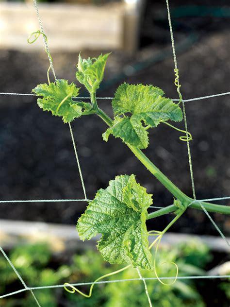 vine  veggie trellis netting    gardenerscom