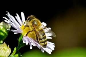 Was Hält Wespen Fern : was tun gegen hornissen so halten sie sie von der sitzecke fern ~ Whattoseeinmadrid.com Haus und Dekorationen